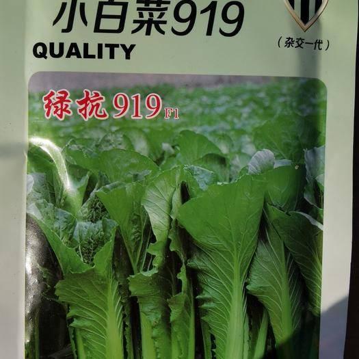 河北省邯鄲市永年區 青梗無毛小白菜 璐通911小白菜種子  生長速度快高抗病