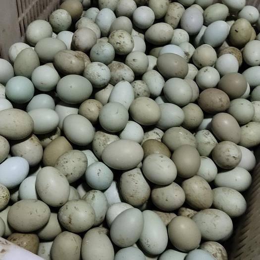 貴州省遵義市匯川區 綠殼雞蛋