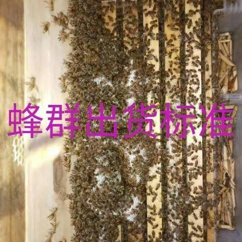 四川省達州市渠縣阿壩中蜂王 大量批發零售中蜂