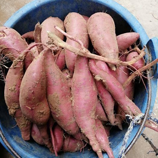 廣西壯族自治區南寧市青秀區 紅薯
