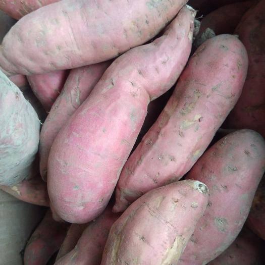 河南省駐馬店市平輿縣 自家種植的煙薯25/大量現貨,有需要的請速速下單?。?!