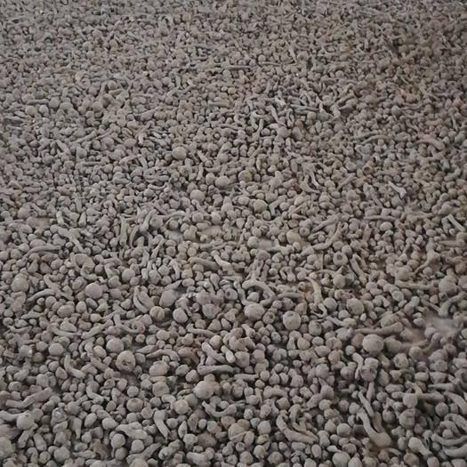 云南省昭通市威信縣 老百姓放心種植的魔芋種大量出貨中