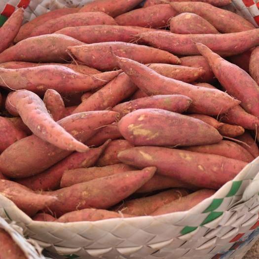 福建省漳州市漳浦縣紅心紅薯 福建六鰲紅蜜薯