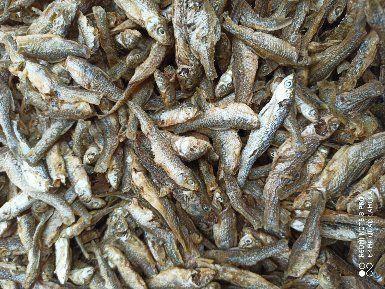 江蘇省宿遷市沭陽縣小麥穗魚干 野生淡水麥穗魚3~6cm大小中等。