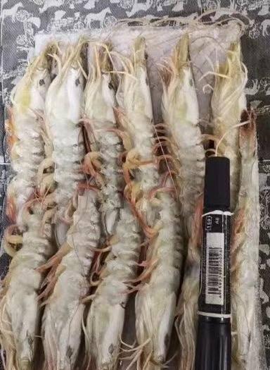 遼寧省丹東市東港市東方對蝦 東方蝦