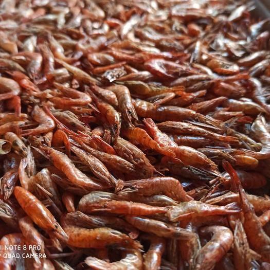 江蘇省蘇州市吳中區烤蝦干 精品淡水烤箱大紅蝦。