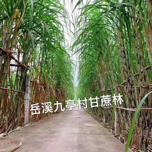 重慶市開州區紅糖