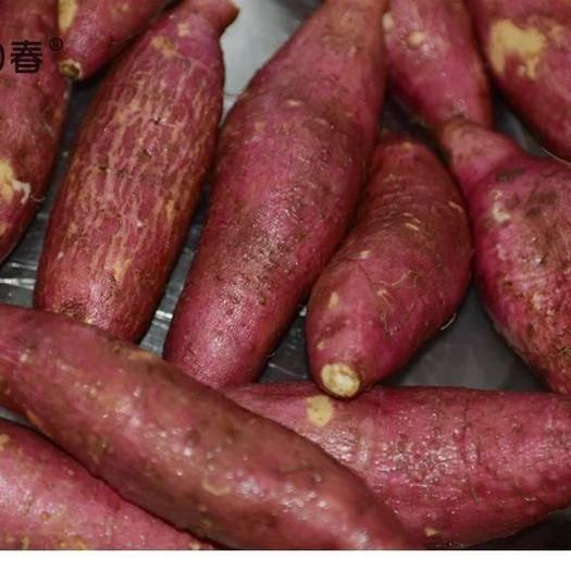 山東省臨沂市臨沭縣濟薯26號紅薯 專業電商微商代發