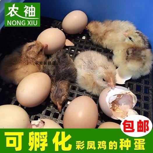 江蘇省南京市棲霞區花鳳雞蛋 彩鳳雞種蛋受精蛋可孵化受精卵觀賞雞土雞農場高產蛋代孵化苗10