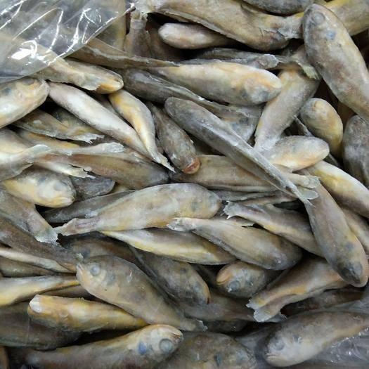 河南省鄭州市中牟縣小黃魚 人工養殖 0.5公斤以下