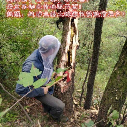 江西省上饒市婺源縣 野生土蜂蜜,不是土蜂蜜,無條件退貨。