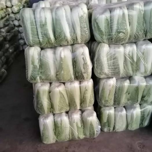 山東省泰安市肥城市北京3號大白菜 大量供應北京三號質量一流全國發貨交通便利貨源充足物美價廉