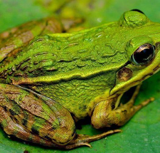 四川省自貢市自流井區青蛙 一條龍服務方便客戶