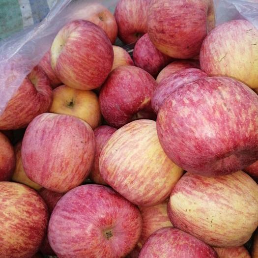 河南省三門峽市靈寶市 正宗靈寶寺河山二級紙袋紅富士蘋果