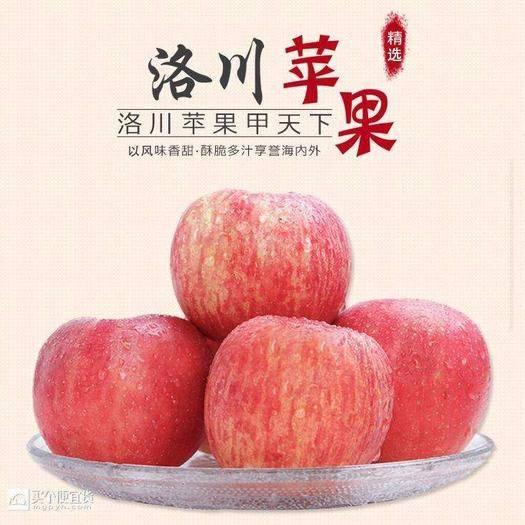 陜西省渭南市富平縣 紅富士蘋果,陜西延安洛川蘋果,一件代發(10斤59.8)