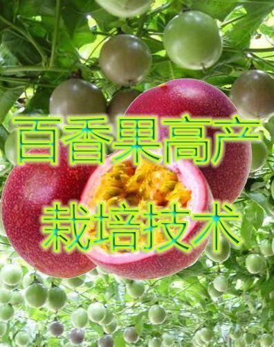 河北省石家莊市新華區 百香果,百香果栽培技術