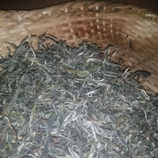 云南省西雙版納傣族自治州勐海縣 老樹普洱茶