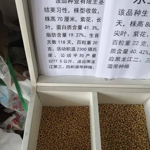 黑龍江省綏化市海倫市黃豆種子 東生1號芽豆種子