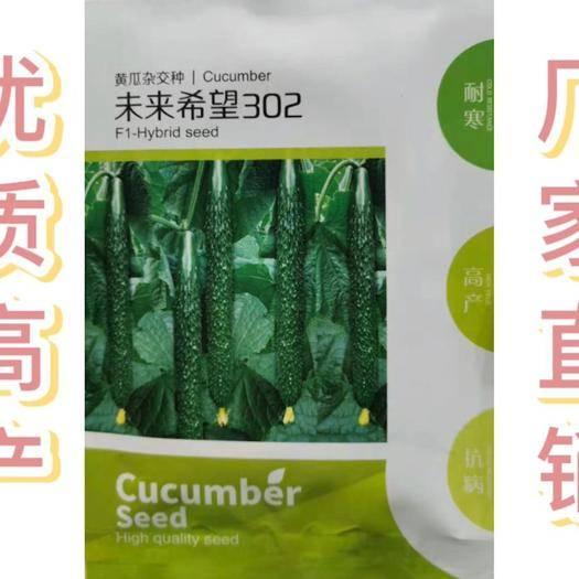 河北省邯鄲市永年區 進口黃瓜種子 高產優質黃瓜種子 未來希望302 一葉一瓜