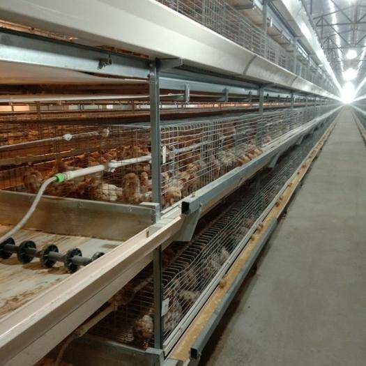 河南省駐馬店市西平縣 華順牧業專業生產雞籠