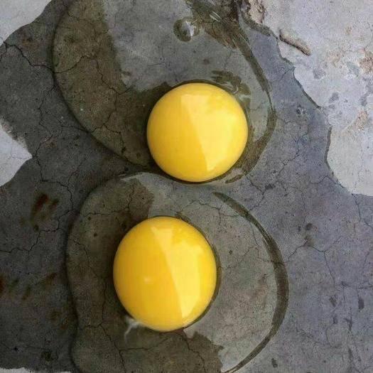 河北省邯鄲市館陶縣土雞蛋 品質好  價格優惠