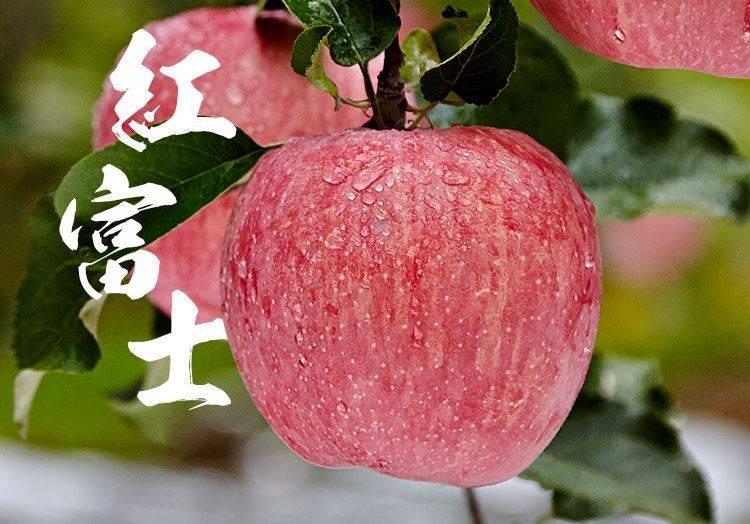 紅富士蘋果     25元/箱    10斤