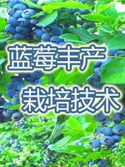 河北省石家莊市新華區 藍莓藍莓栽培技術