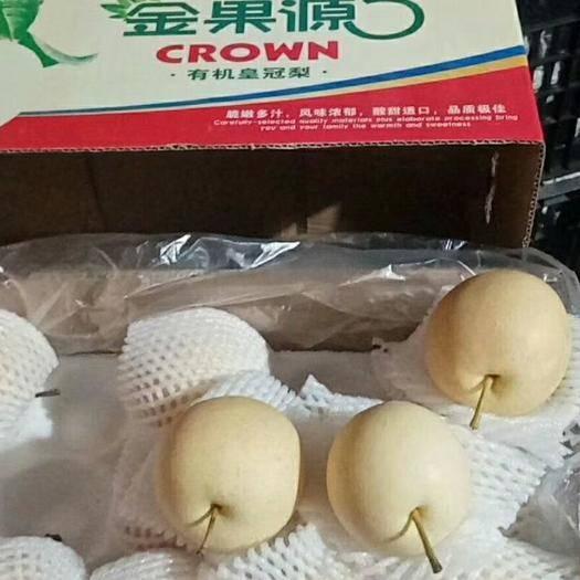 河北省石家庄市晋州市 优质河北晋州皇冠梨水果产地直供