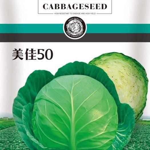 河北省保定市清苑區綠甘藍種子 雙抗口感型美佳50綠松球甘藍