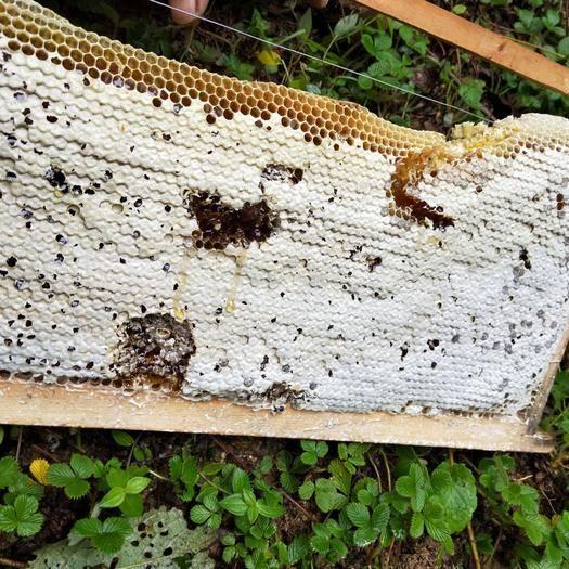 四川省涼山彝族自治州德昌縣土蜂蜜 桶裝 2年以上 98%