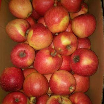 丹霞蘋果 香甜可口,營養豐富