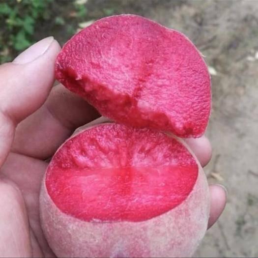河南省信陽市固始縣血桃苗 血桃新品種--滿天紅,自花豐產,含糖15-17度,全離核。