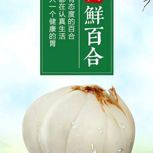 甘肅省蘭州市城關區 甘肅蘭州百合新鮮百合500g純食用天然生甜白合非干貨特產