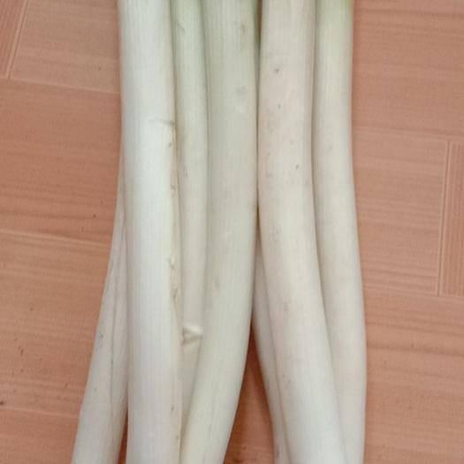 山東省青島市平度市長白大蔥 混裝通貨 毛蔥