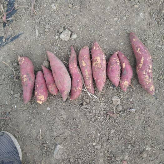 安徽省宿州市泗縣 西瓜紅,口感甜,自己種植,