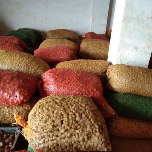 云南省曲靖市富源縣花魔芋 要想收獲好   必須選擇好的種子