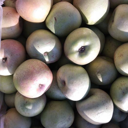 天津市薊州區印度蘋果 80mm以上 翠綠 光果