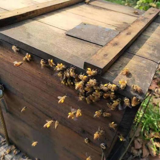 廣東省陽江市陽春市 深山蜂蜜,農家百分百保證無添加