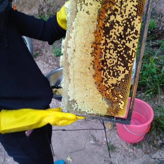 江西省贛州市瑞金市 養在大山深處的土蜂蜜