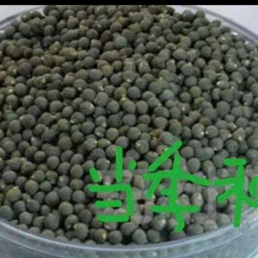 山東省青島市萊西市黃秋葵種子 黃秋葵種
