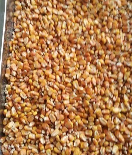 黑龍江省雞西市密山市玉米干糧 大量供貨2019年新糧,糧質好。水分少,品質杠杠的。