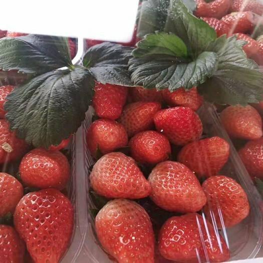 山東省濰坊市安丘市 甜寶,九號草莓已上市