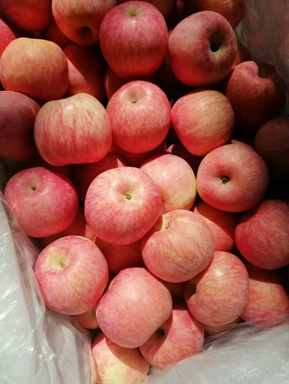 產地常年供應*紅富士蘋果*質量保證