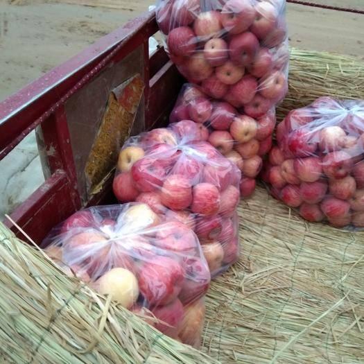 陜西省延安市洛川縣秦冠蘋果 70mm以上 條紅 紙袋