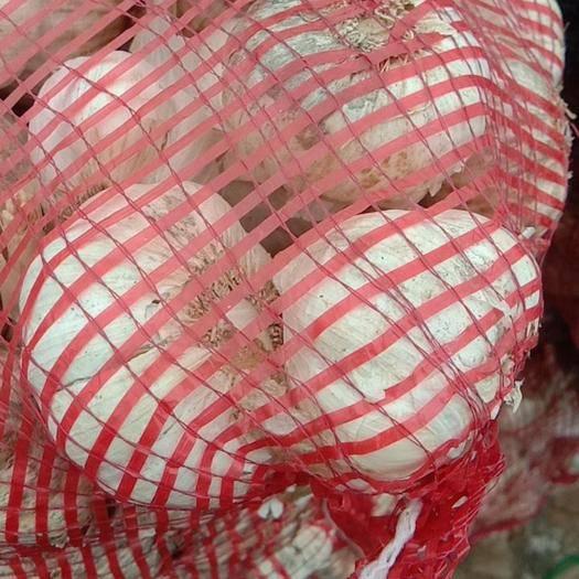 河南省周口市鄲城縣紅皮大蒜 5.5-6.0cm 多瓣蒜