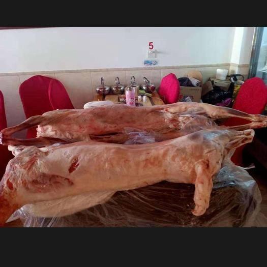 江蘇省徐州市銅山區內蒙古綿羊 50-80斤