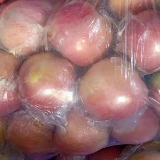 陜西省渭南市臨渭區紅富士蘋果 紅富士