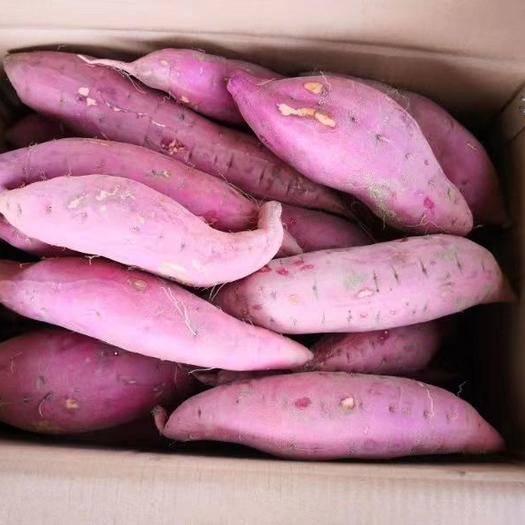 山東省煙臺市芝罘區煙薯25 混裝通貨 紅皮