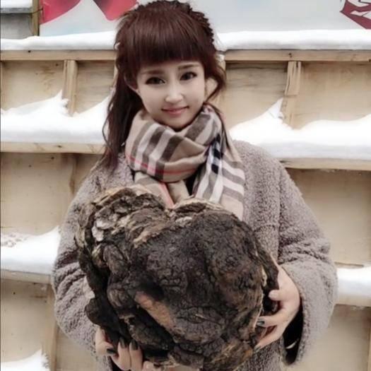 吉林省白山市抚松县 桦树茸 纯野大块桦树茸天然胰岛素一块4斤到五斤左右