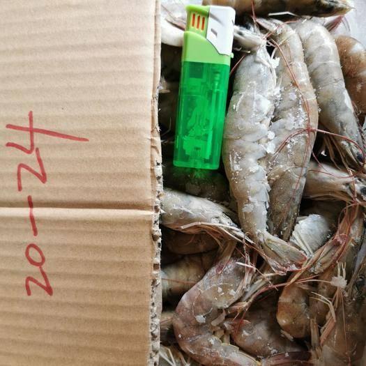 廣東省江門市臺山市 鮮活凍蝦,規格齊全。質優價廉。一次合作終生朋友